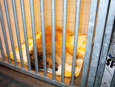 Kijkje opname honden verwarmingslamp
