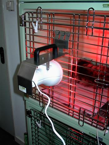 Kijkje opname katten verwarmingslamp