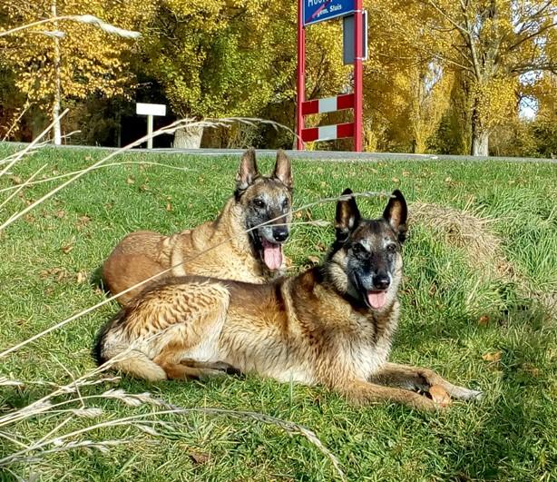 Nienke honden Amaike Artho