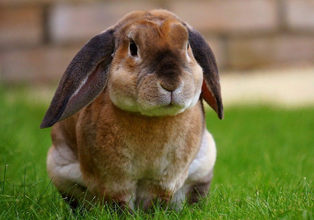 konijn vaccinatie advies