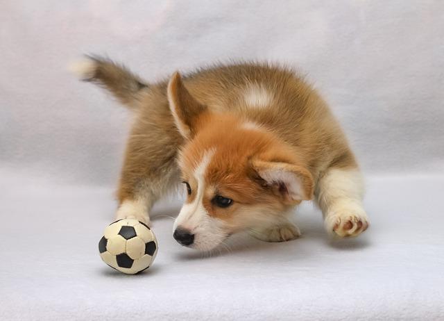 news cheyletiella pup parasiet