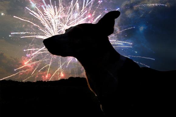 vuurwerkangst-hond