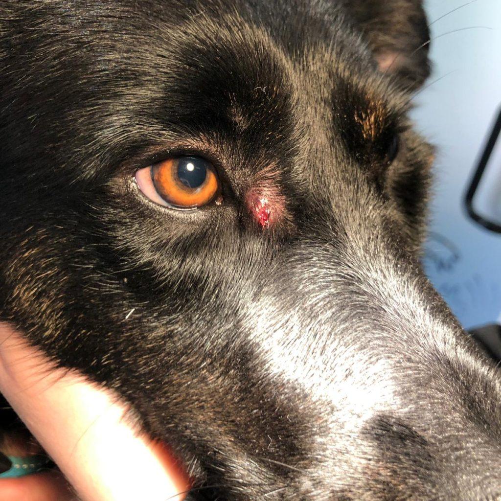 Patient spoelworm wondje bij het oog